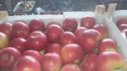 Продаю яблоки из Молдавии