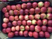 Польское яблоко,  голландская груша